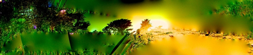 IMG_0292 sunny