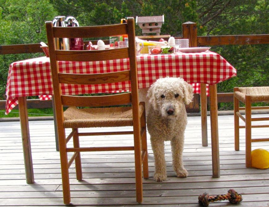 Come on, breakfast is ready, where is everybody?