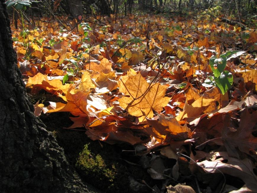 IMG_0054 fall Indiana
