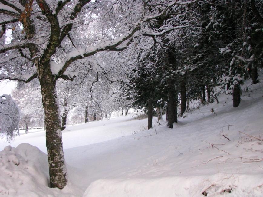 IMG_3795 vinter skog