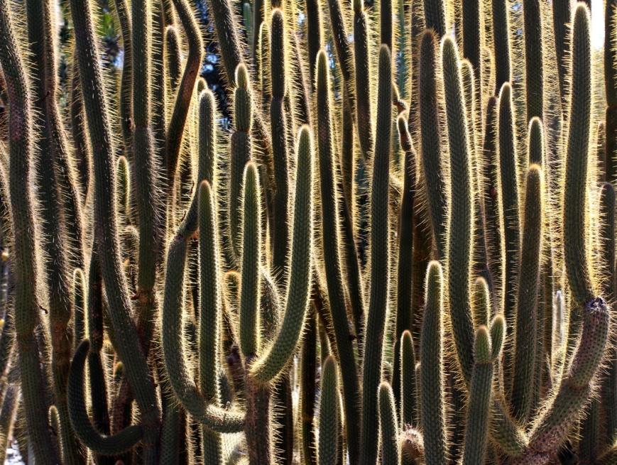 IMG_7384 cactus