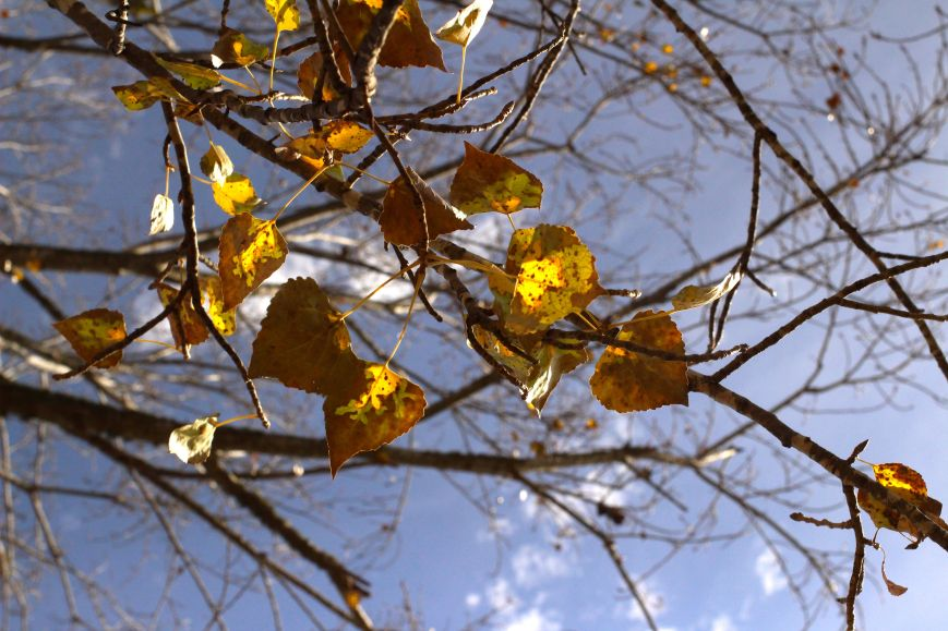 IMG_2527 winter california