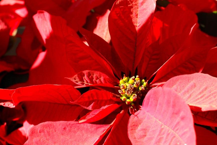 IMG_2647 julestjerne