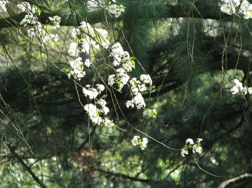 IMG_2792 spring 2