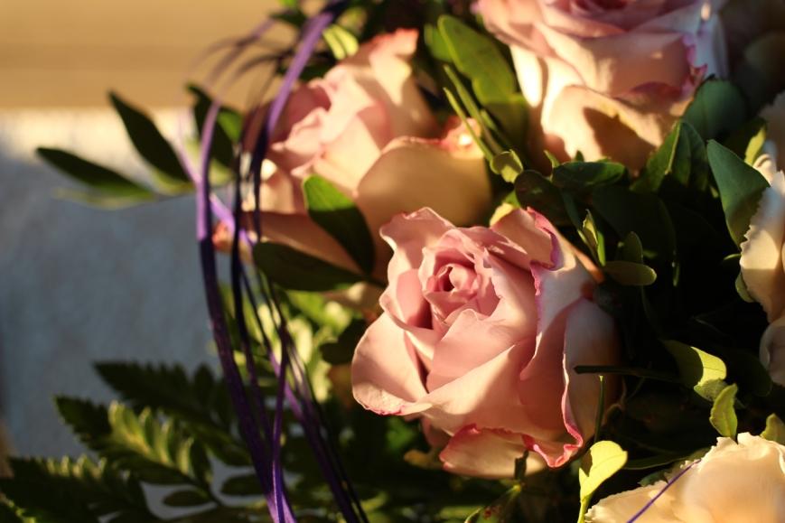 rose i sol